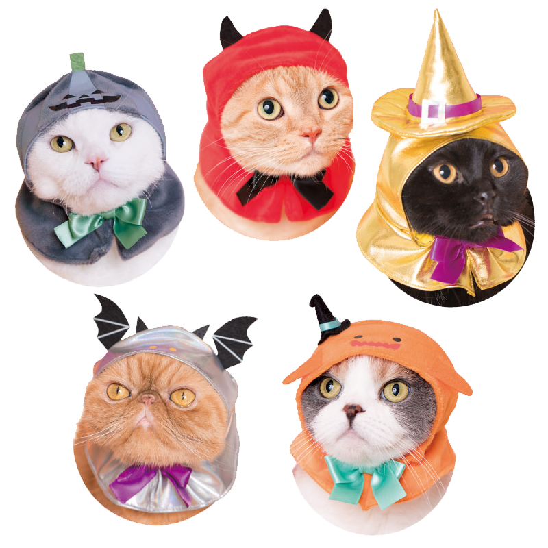 Halloween Kitties Party Colors